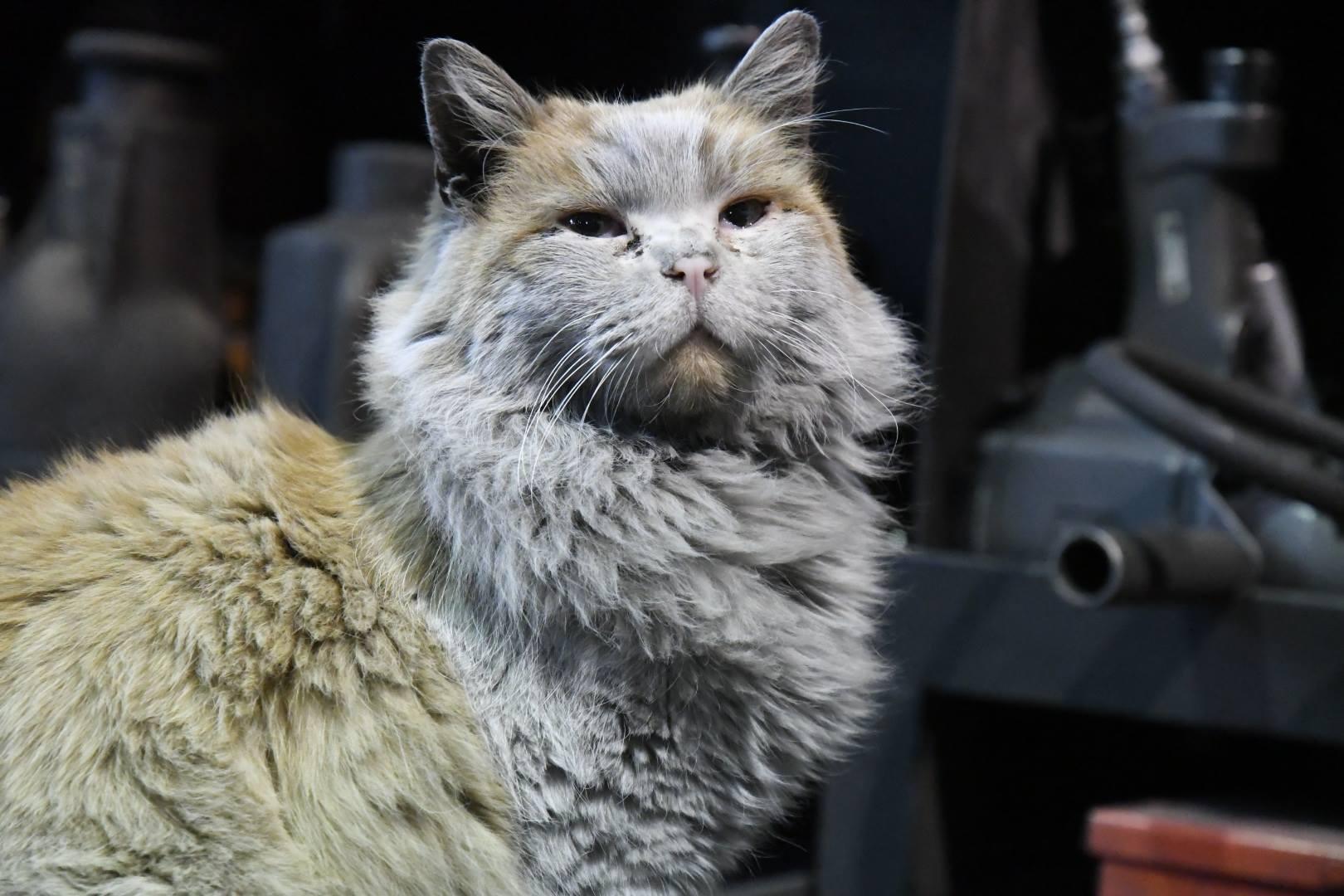 Primo piano di un gatto selvatico