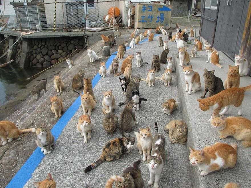 isola-popolata-da-gatti