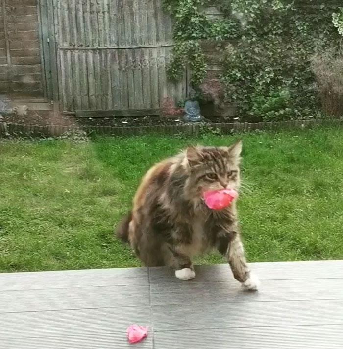 willow-porta-fiori-rosie