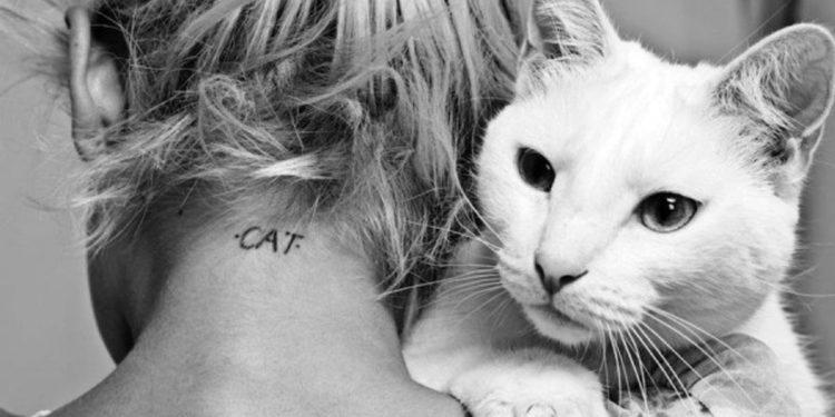 Scelta del gatto ecco che cosa può dire sulla nostra personalità