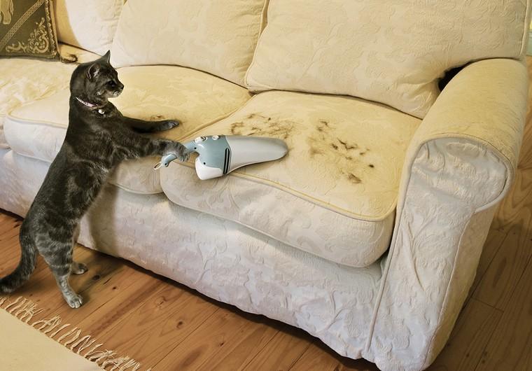 gatto-pulisce-pelo