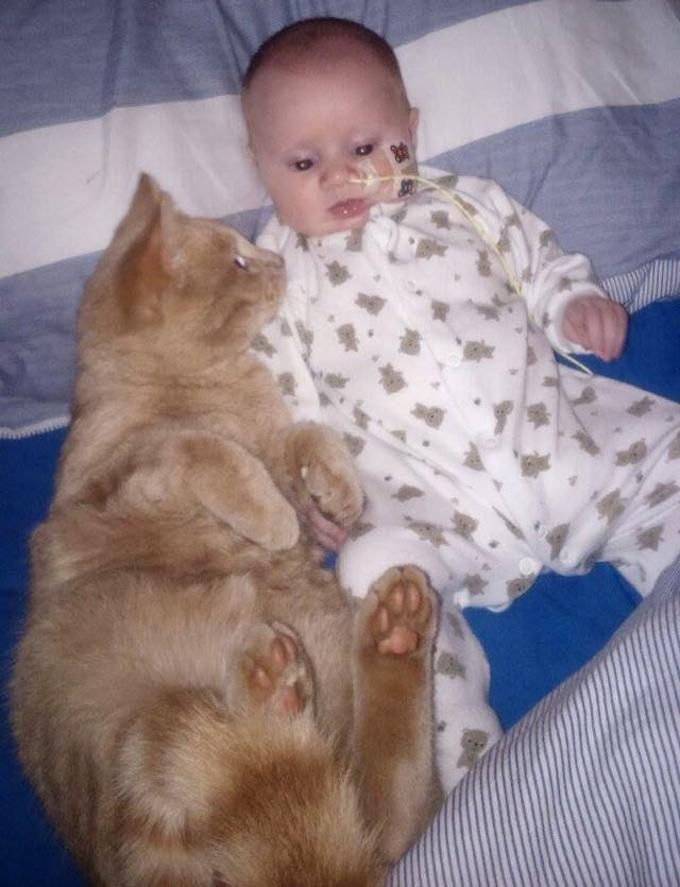 gatto-veglia-su-bambino