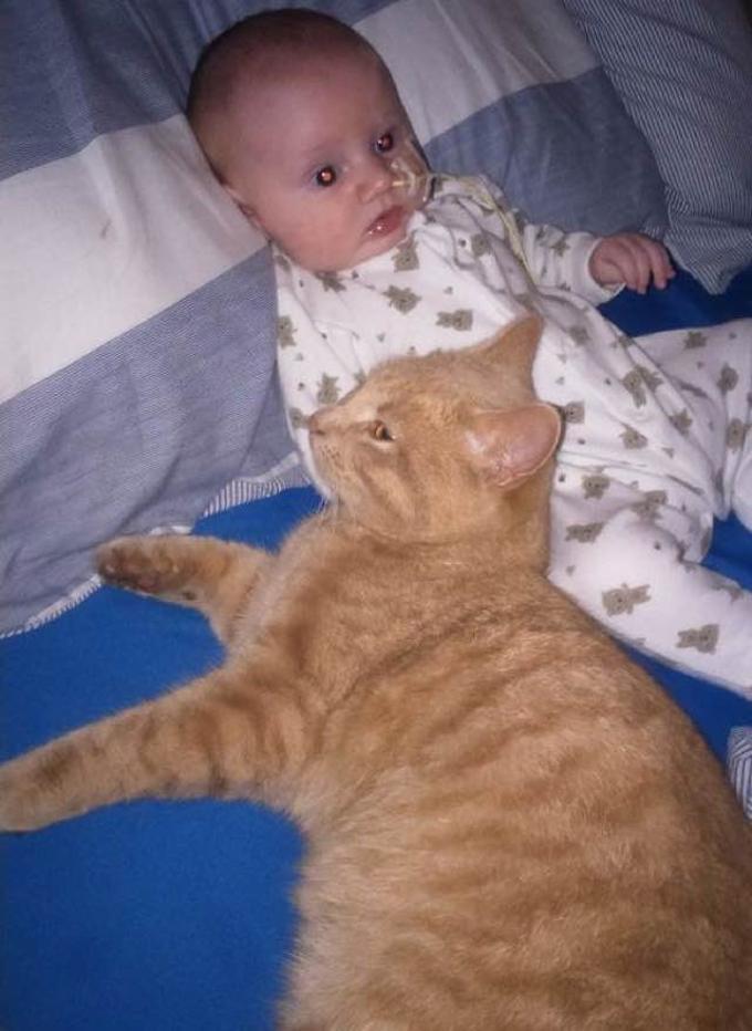gatto-vicino-al-bambino