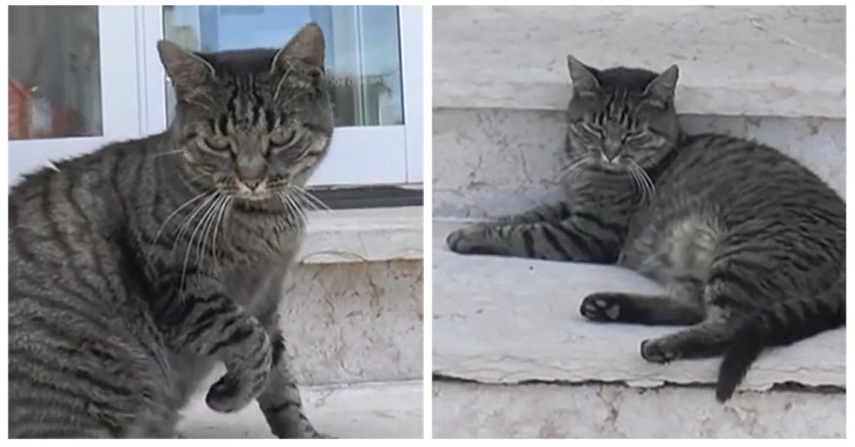 Tenny, la gatta Hachiko