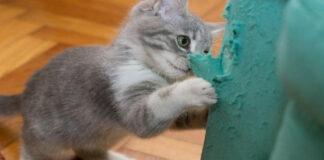 Un gattino che graffia il divano