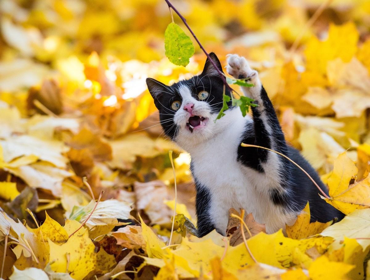 Un gattino tra le foglie