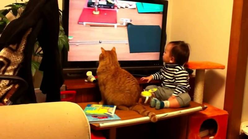 Un gatto e un bambino guardano insieme la televisione