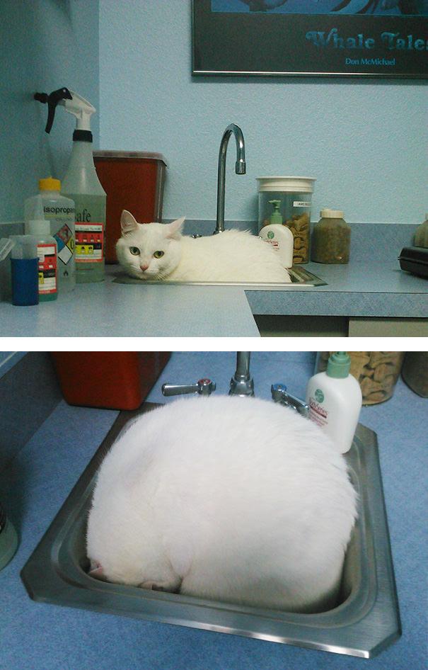 gatto-nasconde-nel-lavandino