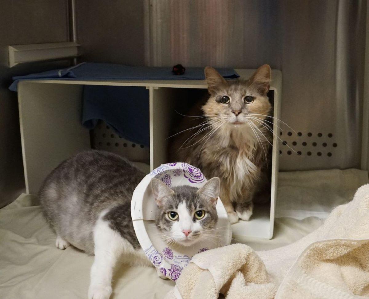 due-gatti-in-box