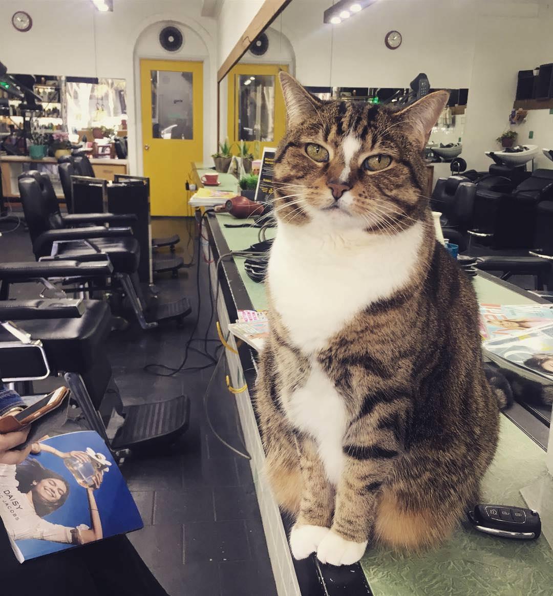 gatto-nel-salone-di-bellezza