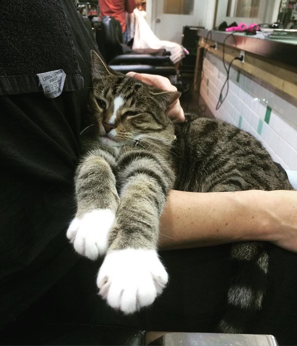 gatto-dispensa-coccole
