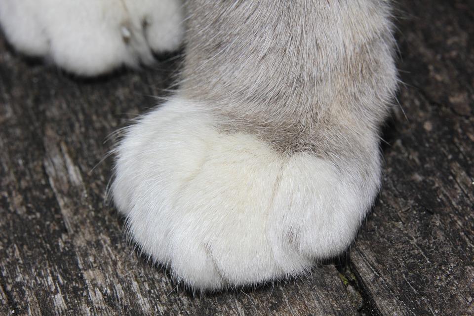 Zampa di un gatto
