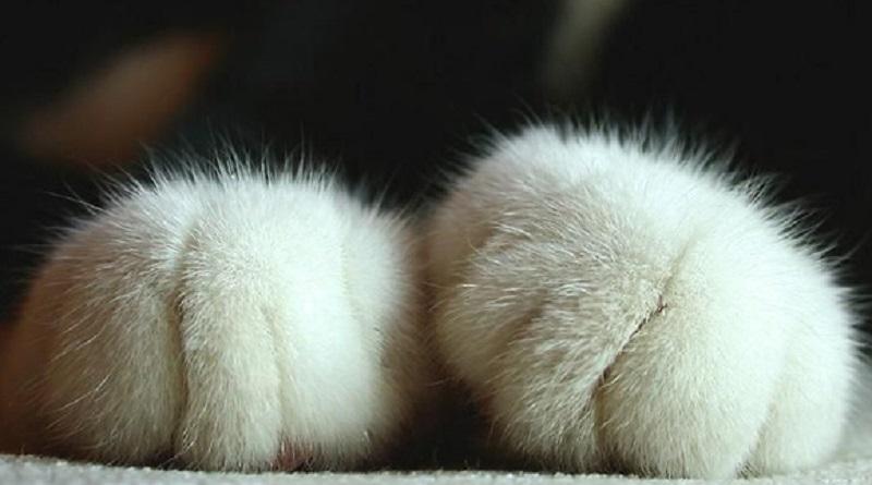 Zampe di un gatto