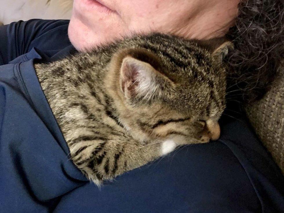 gatto-dorme-sulla-spalla
