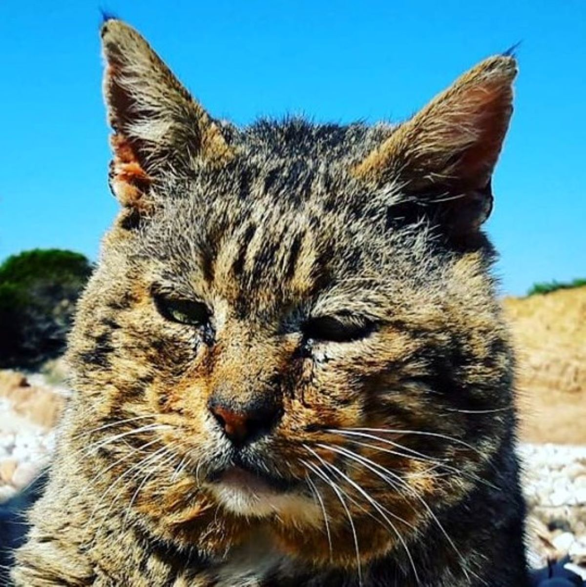 gatto-con-sguardo-assorto
