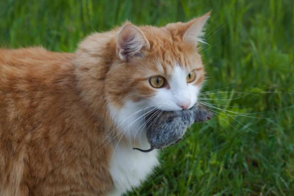 gatto-con-topo