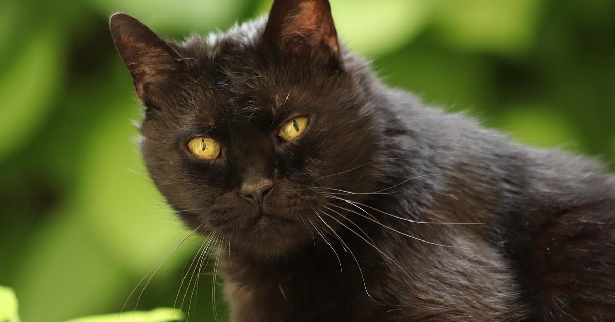 gatto nero su un albero
