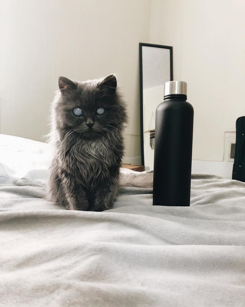 gattino non vedente