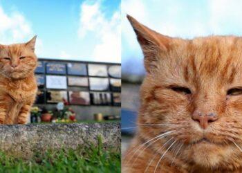gatto-rosso-al-cimitero