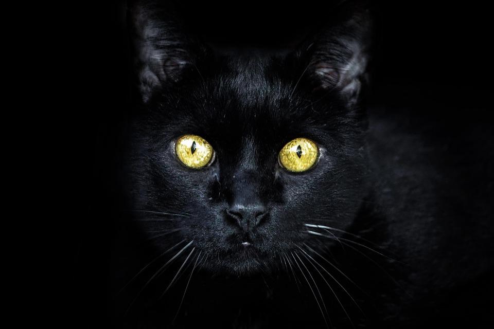 gatto-nero-fissa