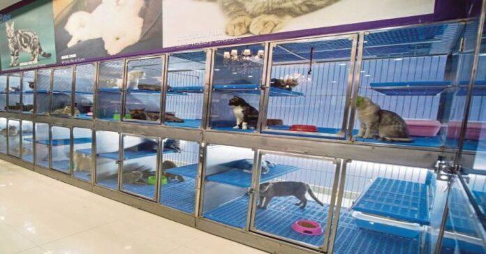 gatti-negozio-animali