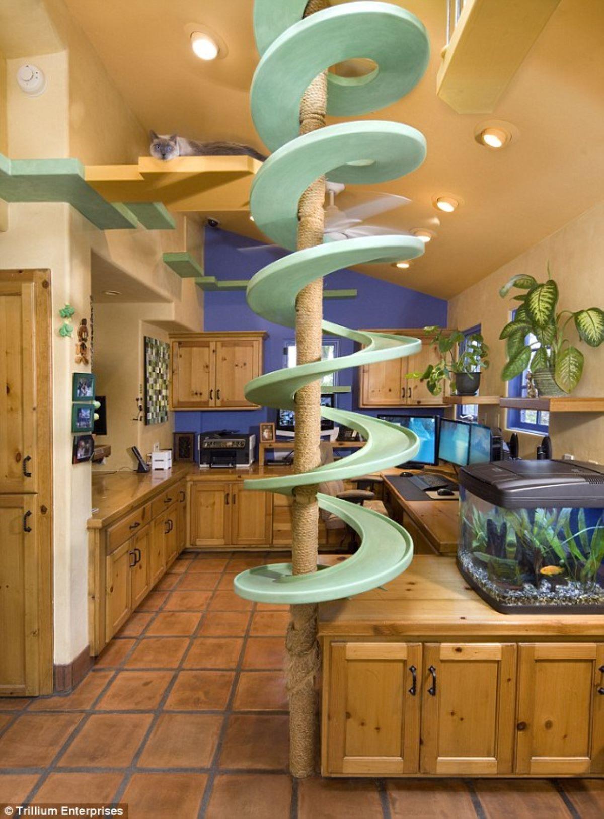 accessorio-per-gatti-in-casa