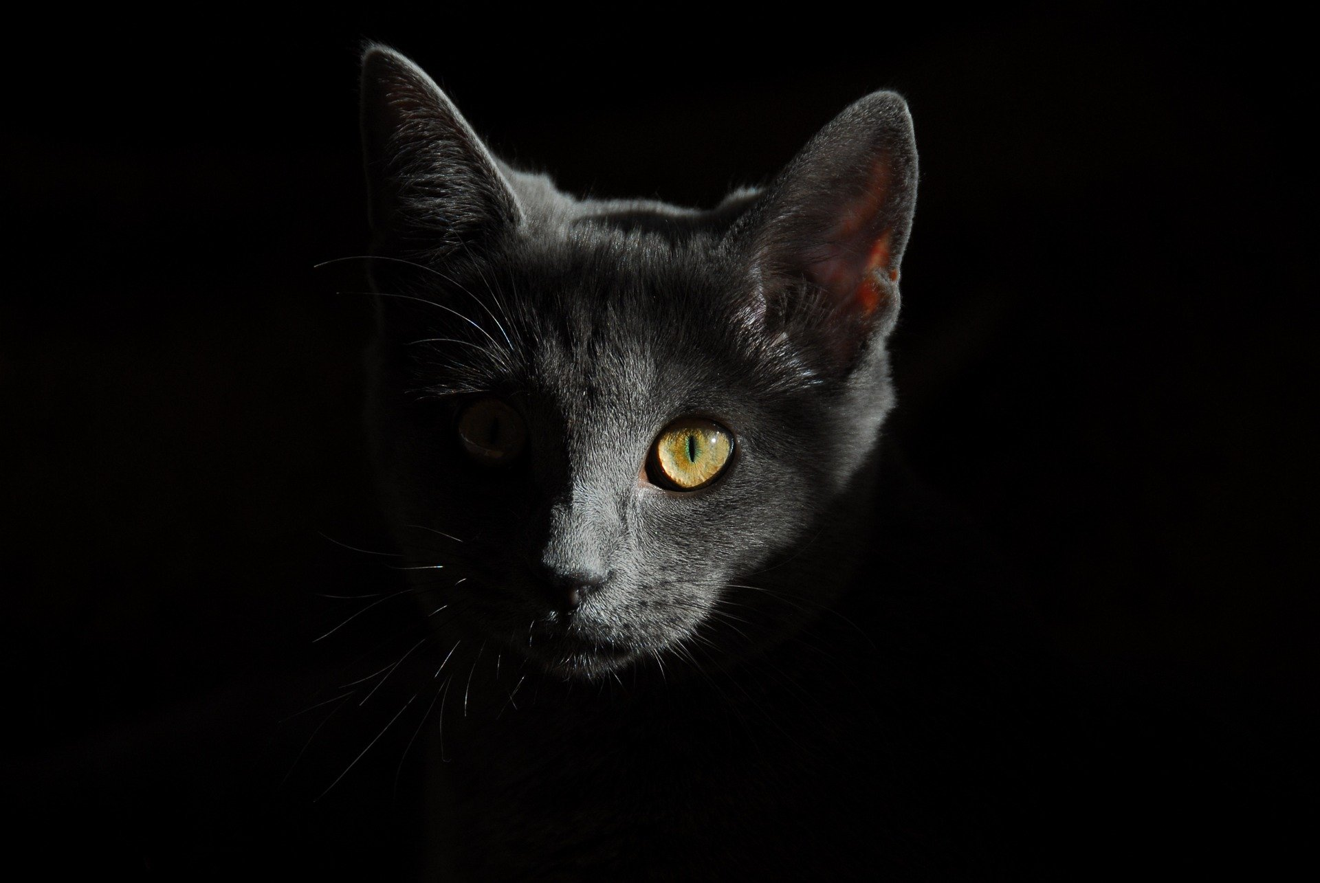 gatto-guarda-fisso