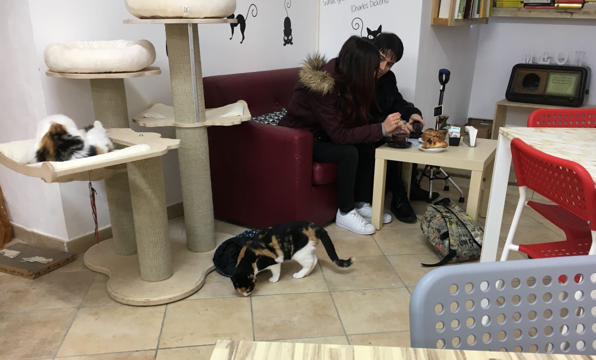 gatti-vicino-a-ragazzi-al-bar