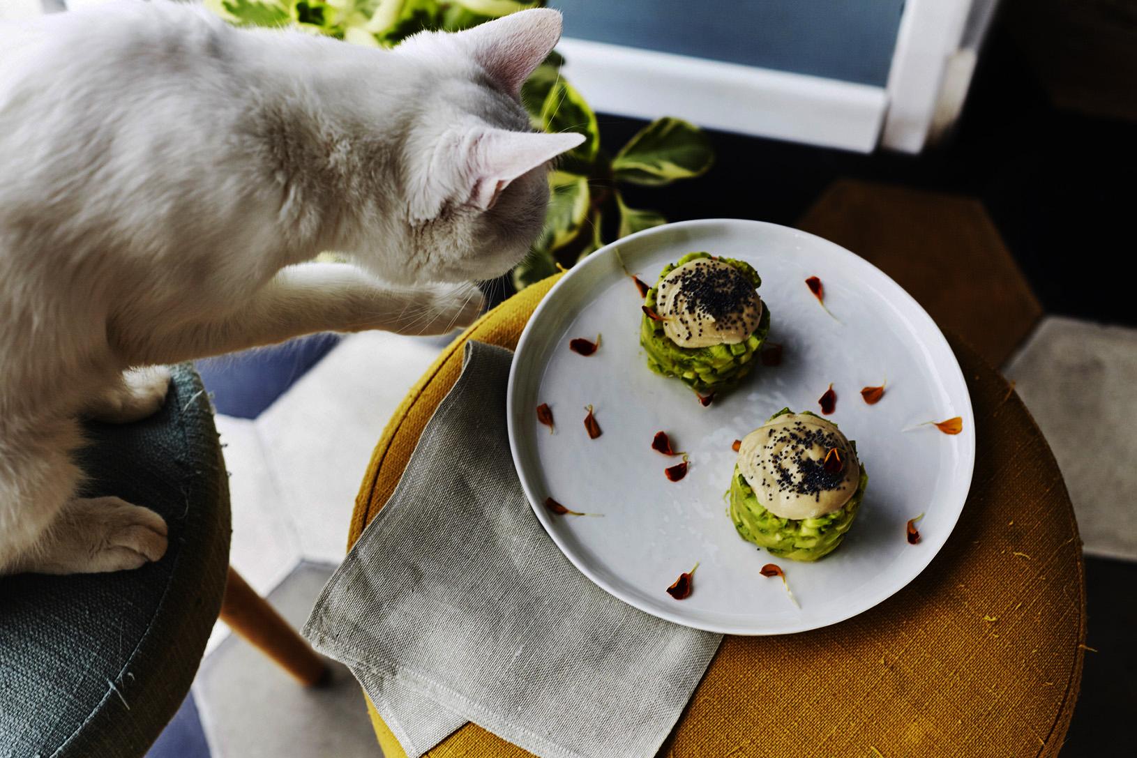 gatto-su-cibo