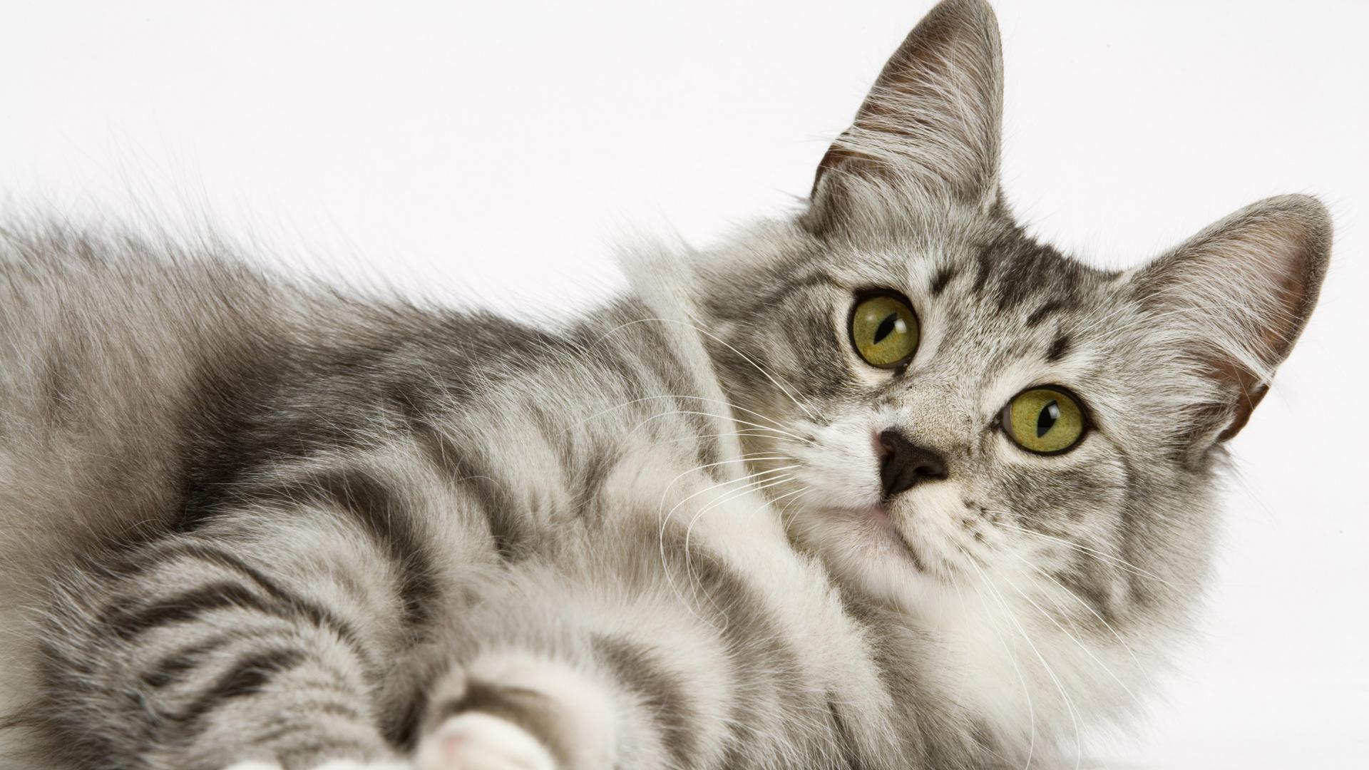 gatto-guarda-non-si-sa-cosa