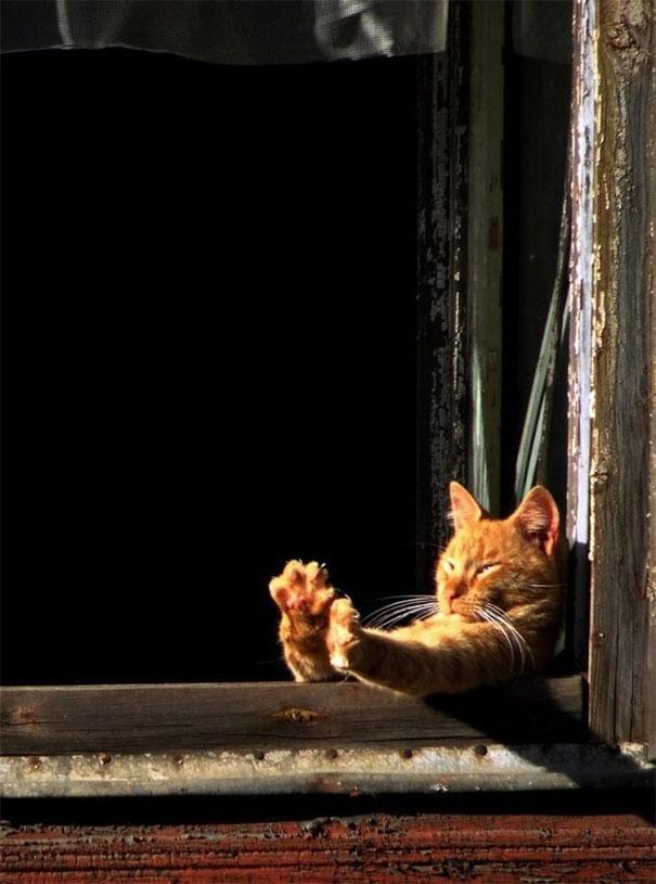 gatto-al-tramonto