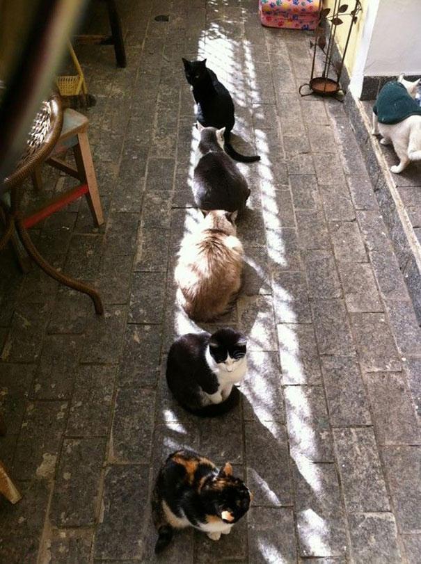 gatti-in-fila-al-sole