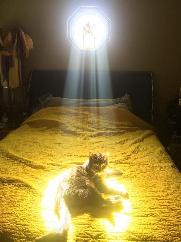 gatto-prescelto