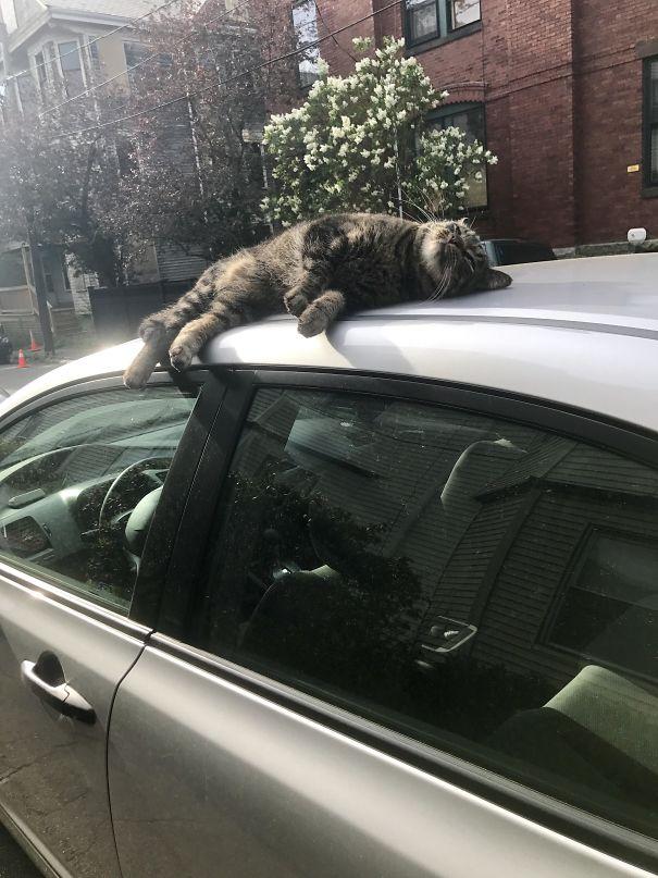 gatto-sulla-macchina