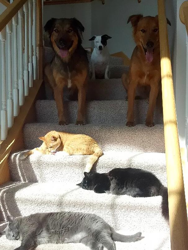 cani-guardano-gatti-al-sole