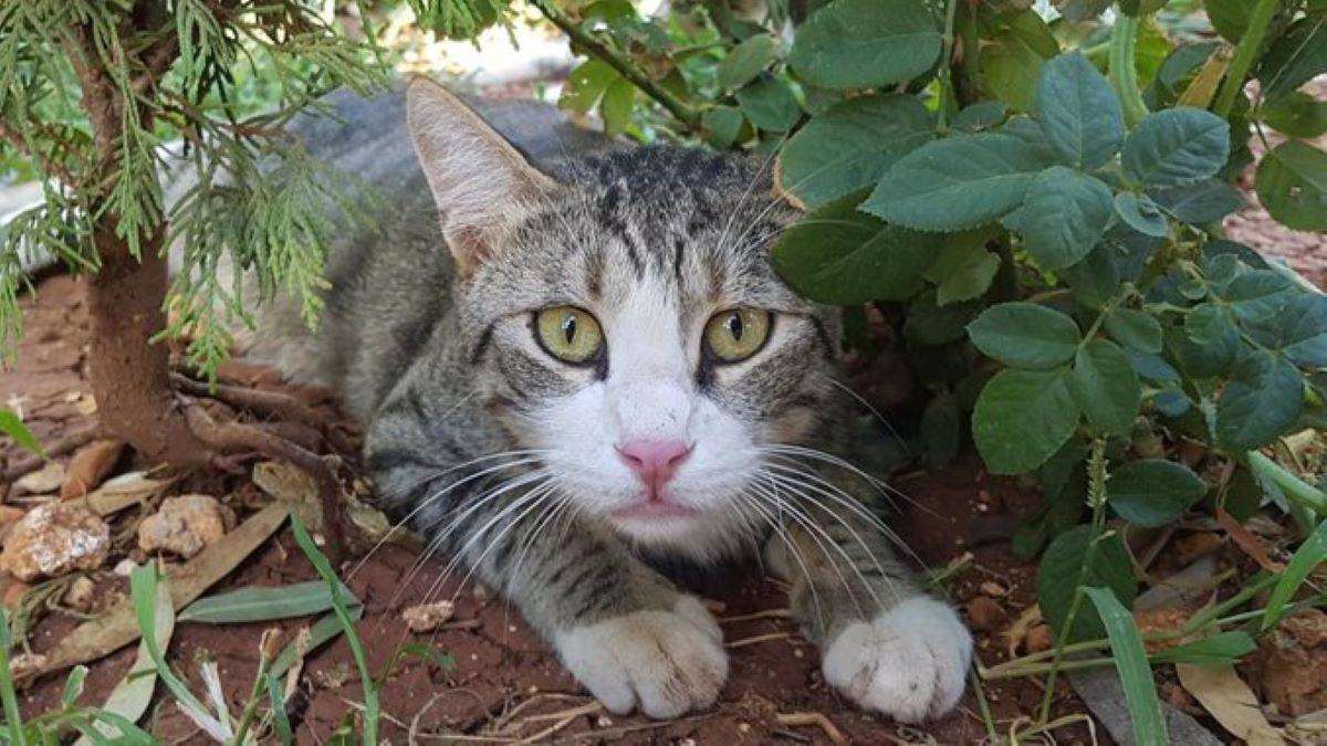 gattino-curioso