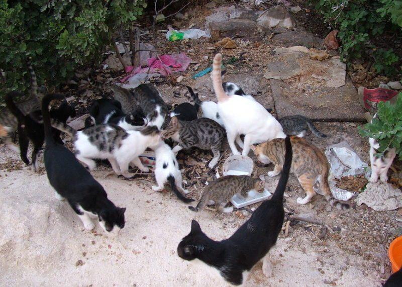 colonia felina mangia