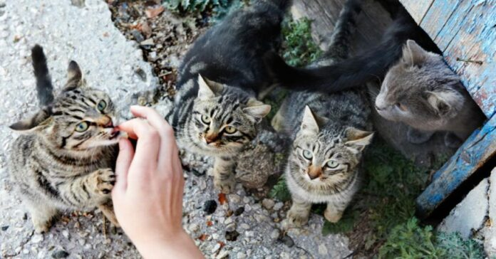 gruppo-di-gattini