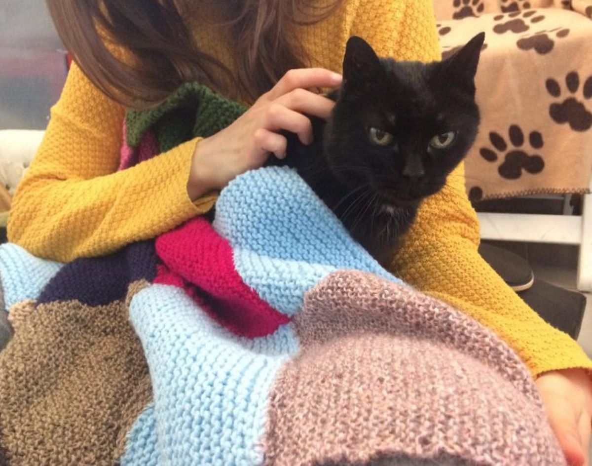 gatto-avvolto-dalle-coperte