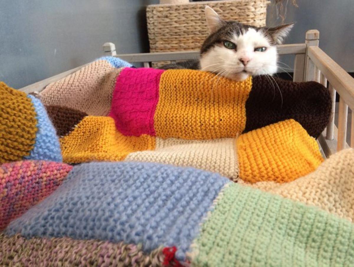 gatto-con-coperta-colorata