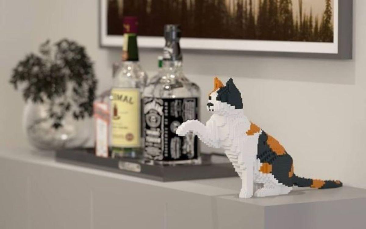gatto-in-mattoncino-che-solleva-zampa