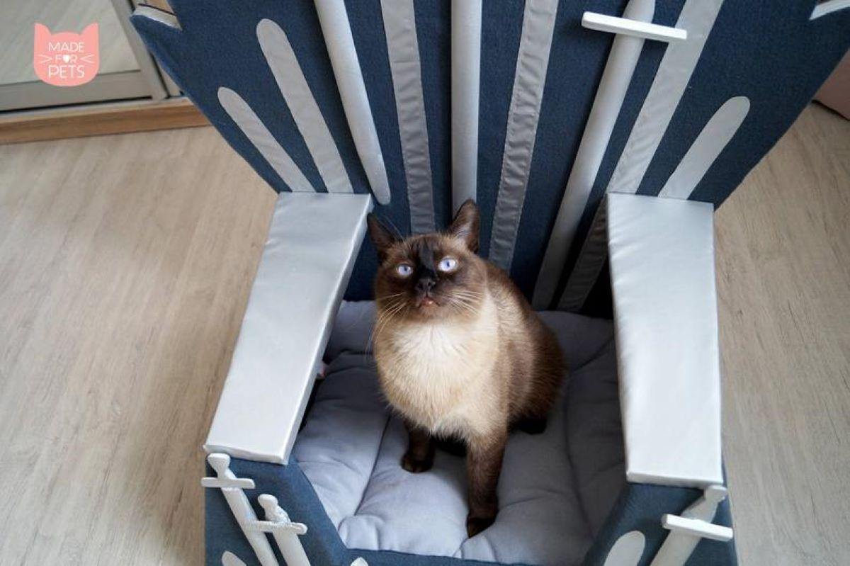 gatto-su-cuscino