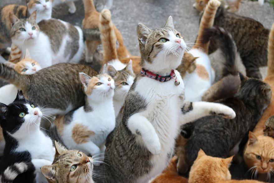 gatti-affamati