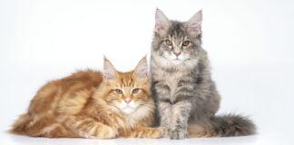 Vermi-gatto-rimedi-naturali