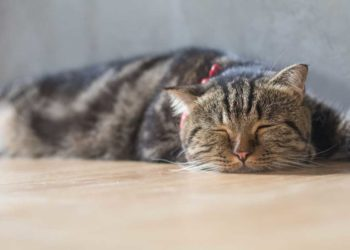 gatto dorme per terra