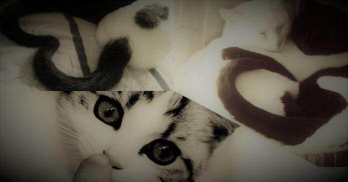 dieci-segnali-che-il-vostro-gatto-vi-ama