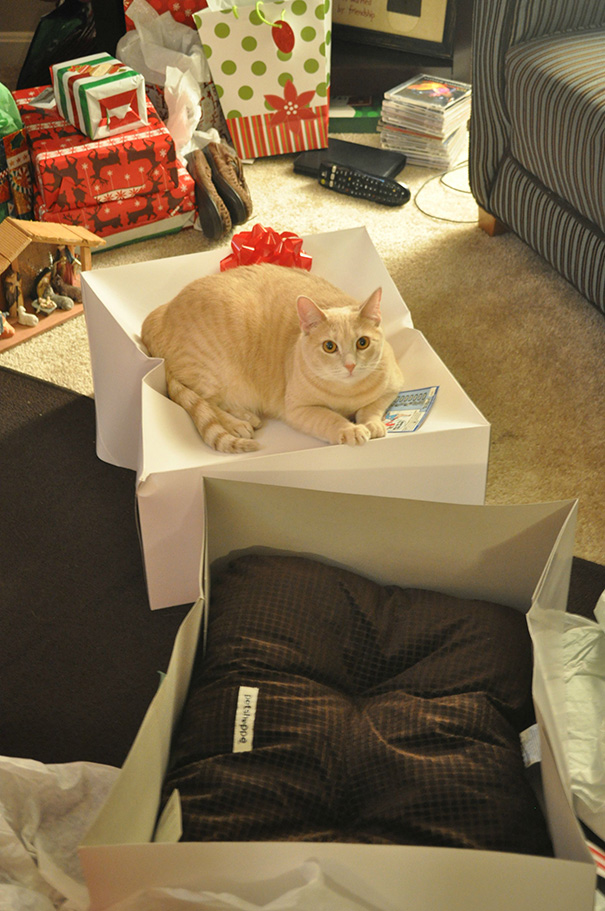 gatto-sulla-scatola-regalo