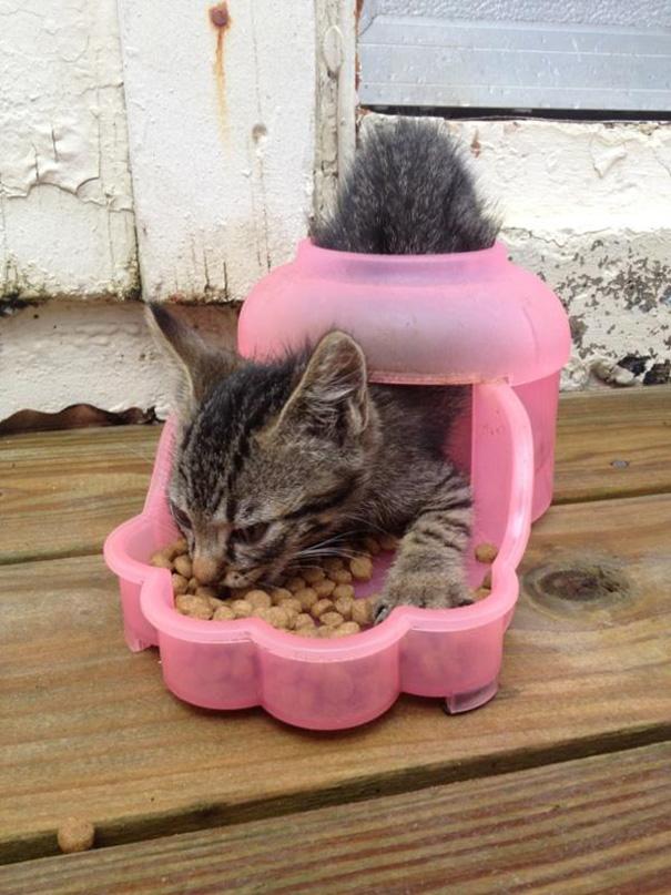 gattino-mangia-crocchette