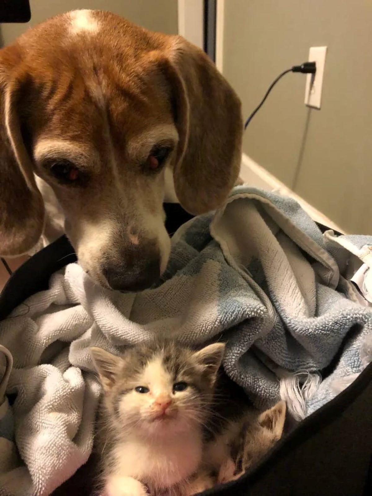 gattini-con-cane