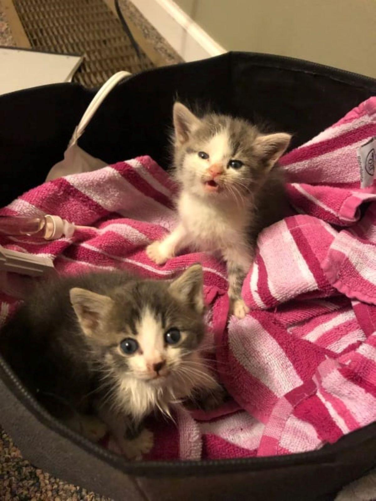 gattini-con-coperta-a-strisce